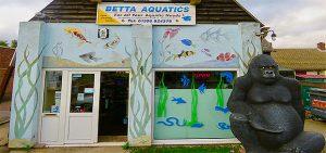 Betta Aquatics Colchester Koi Carp Reptiles Colchester
