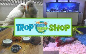 Trop Shop Pet Shop Colchester Tropical Fish Reptiles Snakes