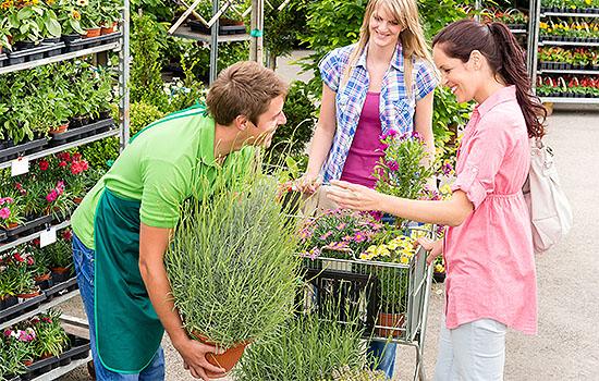 St Johns Plant Centre Colchester Plant Centre Garden Supplies